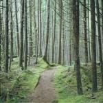Tejomaya's walk in Silence Pilgrimage